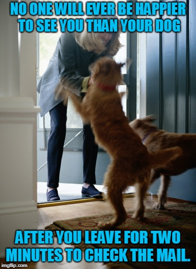 nd it's true! (Dog week May 1-8, a Landon_the_memer and NikkoBellic event) | NO ONE WILL EVER BE HAPPIER TO SEE YOU THAN YOUR DOG AFTER YOU LEAVE FOR TWO MINUTES TO CHECK THE MAIL. | image tagged in dog,nixieknox,memes,dog week,you're gonna get a lickin' | made w/ Imgflip meme maker