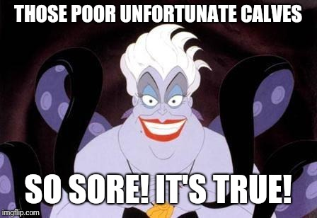 Ursula | THOSE POOR UNFORTUNATE CALVES SO SORE! IT'S TRUE! | image tagged in ursula | made w/ Imgflip meme maker