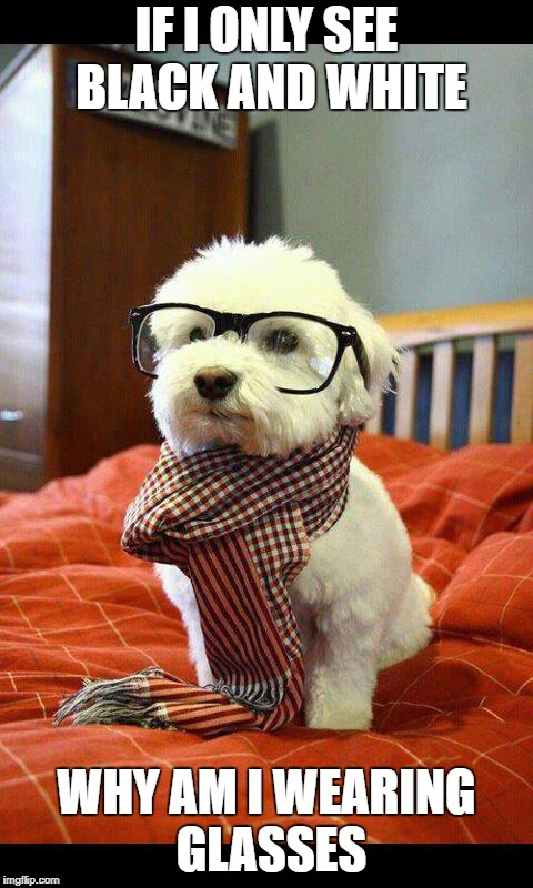 Intelligent Dog | IF I ONLY SEE BLACK AND WHITE WHY AM I WEARING GLASSES | image tagged in memes,intelligent dog | made w/ Imgflip meme maker