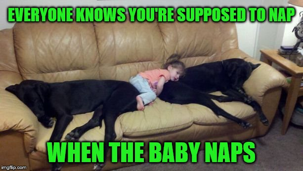 Dog week May 1-8, a Landon_the_memer and NikkoBellic event | EVERYONE KNOWS YOU'RE SUPPOSED TO NAP WHEN THE BABY NAPS | image tagged in memes,dogs,nap time,babies,dog week | made w/ Imgflip meme maker