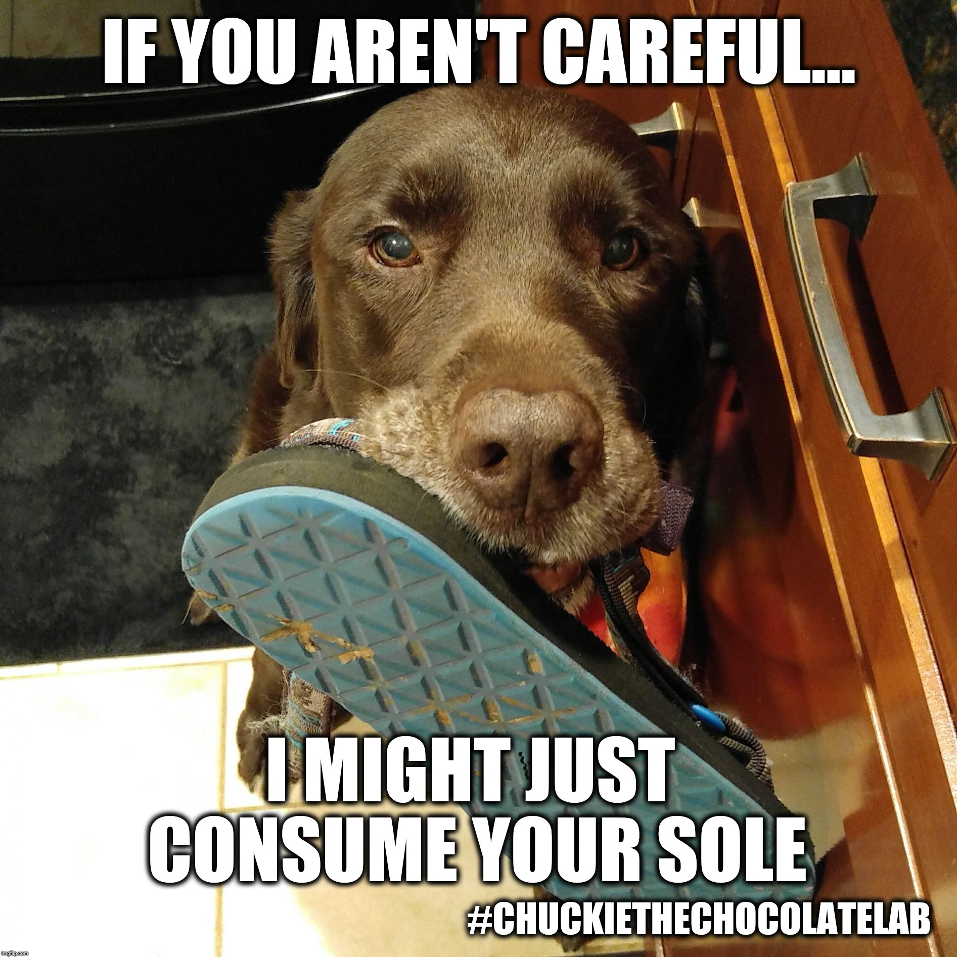 If you aren't careful I might just consume your sole | IF YOU AREN'T CAREFUL... I MIGHT JUST CONSUME YOUR SOLE #CHUCKIETHECHOCOLATELAB | image tagged in chuckie the chocolate lab teamchuckie,funny,dogs,memes,puns,sandals | made w/ Imgflip meme maker