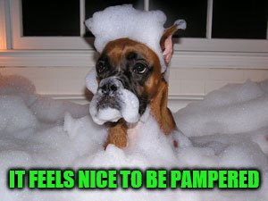 IT FEELS NICE TO BE PAMPERED | made w/ Imgflip meme maker