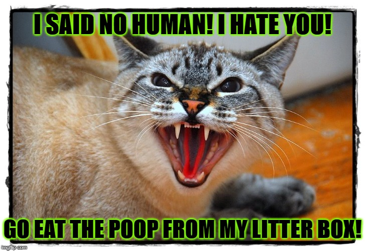 I SAID NO HUMAN! I HATE YOU! GO EAT THE POOP FROM MY LITTER BOX! | image tagged in go away | made w/ Imgflip meme maker
