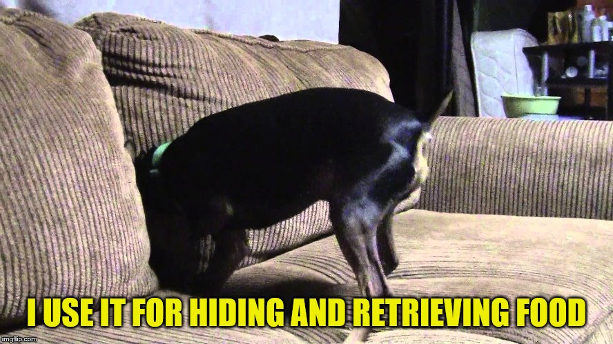 I USE IT FOR HIDING AND RETRIEVING FOOD | made w/ Imgflip meme maker