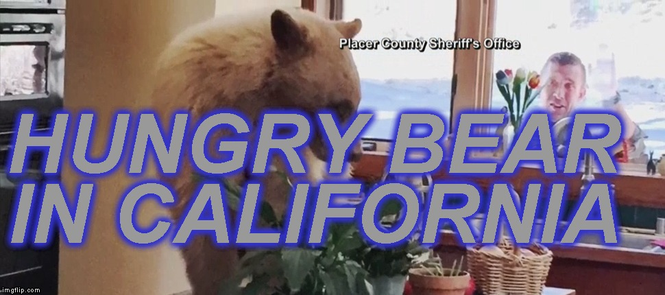 After hibernation, bear eats bread and fruit in man's house | HUNGRY BEAR IN CALIFORNIA | image tagged in memes | made w/ Imgflip meme maker