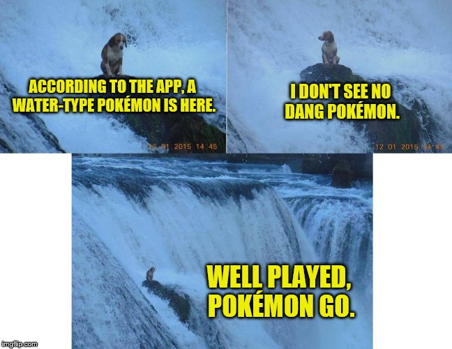 Dog week May 1-8, a Landon_the_memer and NikkoBellic event | ACCORDING TO THE APP, A WATER-TYPE POKÉMON IS HERE. WELL PLAYED, POKÉMON GO. I DON'T SEE NO DANG POKÉMON. | image tagged in memes,dog week,pokemon go | made w/ Imgflip meme maker