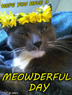 HOPE YOU HAVE A MEOWDERFUL DAY | made w/ Imgflip meme maker
