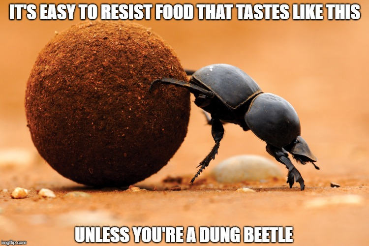 Diet Advice From An Expert | IT'S EASY TO RESIST FOOD THAT TASTES LIKE THIS UNLESS YOU'RE A DUNG BEETLE | image tagged in memes | made w/ Imgflip meme maker