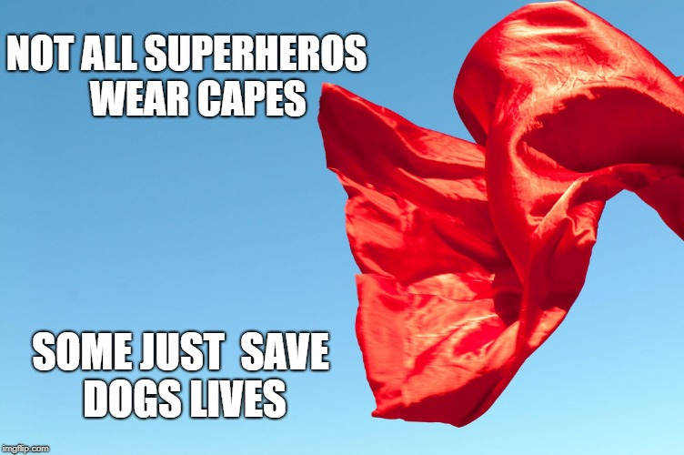 NOT ALL SUPERHEROS   WEAR CAPES SOME JUST  SAVE DOGS LIVES | image tagged in superhero | made w/ Imgflip meme maker