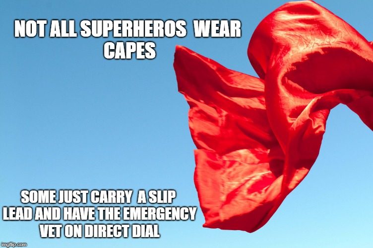 NOT ALL SUPERHEROS  WEAR CAPES SOME JUST CARRY  A SLIP LEAD AND HAVE THE EMERGENCY VET ON DIRECT DIAL | image tagged in superhero | made w/ Imgflip meme maker
