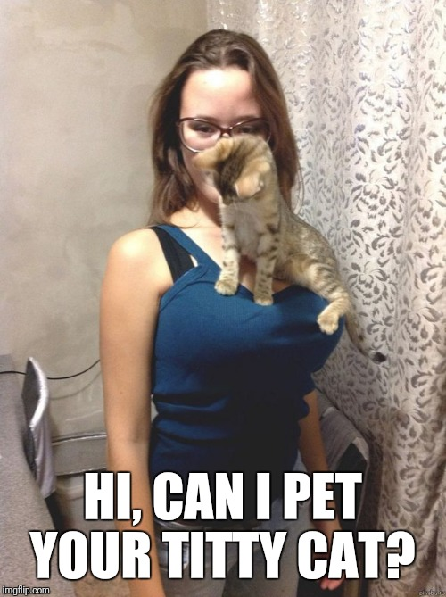 Here kitty kitty | HI, CAN I PET YOUR TITTY CAT? | image tagged in kitty,cat,boobs,tits | made w/ Imgflip meme maker
