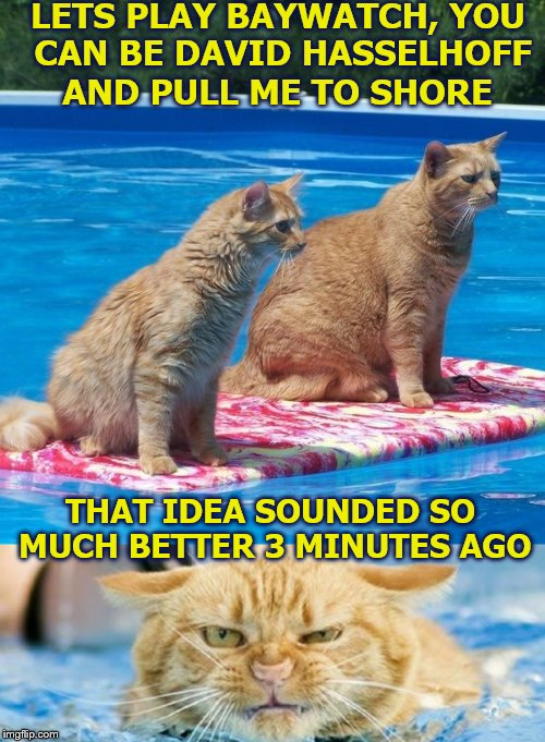 Next lets play Skipper and Gilligan... | LETS PLAY BAYWATCH, YOU CAN BE DAVID HASSELHOFF AND PULL ME TO SHORE THAT IDEA SOUNDED SO MUCH BETTER 3 MINUTES AGO | image tagged in memes,cats,baywatch,the hoff,german cats | made w/ Imgflip meme maker