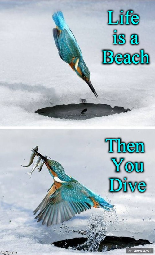 The Fisher King and the Fruits of the Dive | Life is a Beach Then You Dive | image tagged in vince vance,bird diving for minnows,birds are great fishermen,bird diving into the freezing water,the kingfisher is still king,h | made w/ Imgflip meme maker
