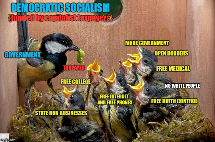 Bird, Bird, Bird, Bird is the regurge | {funded by capitalist taxpayers} MORE GOVERNMENT | image tagged in democrats,democratic socialism,maga,taxes,let's raise their taxes,snowflakes | made w/ Imgflip meme maker