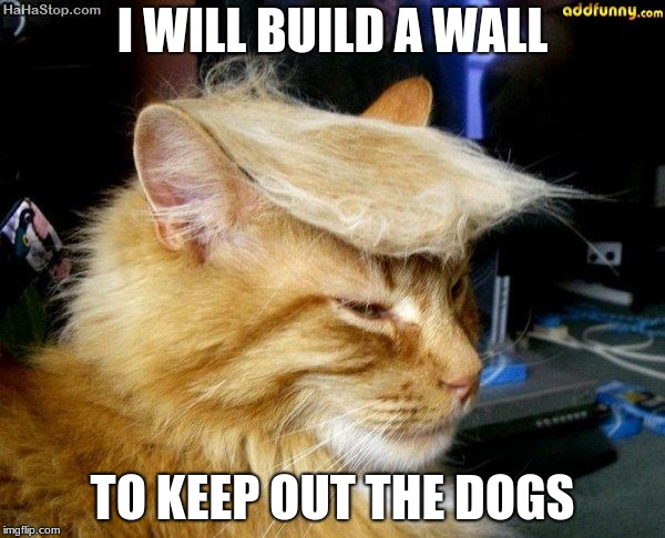 donald trump cat |  I WILL BUILD A WALL; TO KEEP OUT THE DOGS | image tagged in donald trump cat | made w/ Imgflip meme maker