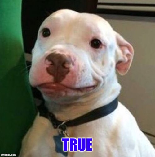 Awkward Dog | TRUE | image tagged in awkward dog | made w/ Imgflip meme maker