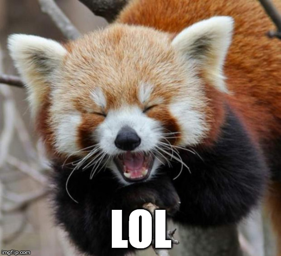 lol red panda | LOL | image tagged in lol red panda | made w/ Imgflip meme maker