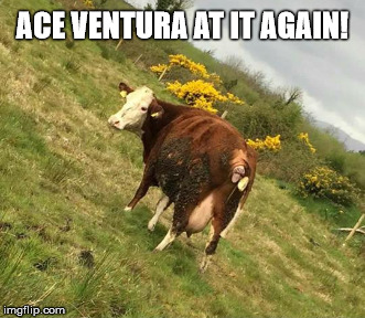ace ventura | ACE VENTURA AT IT AGAIN! | image tagged in ace ventura | made w/ Imgflip meme maker