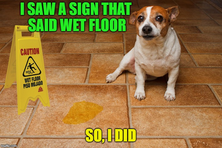Some dogs can read | I SAW A SIGN THAT SAID WET FLOOR SO, I DID | image tagged in memes,dogs,pee,wet,floor | made w/ Imgflip meme maker