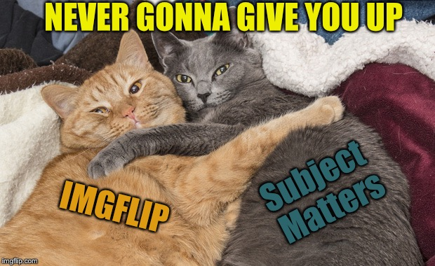 Two cats hugging | IMGFLIP Subject Matters NEVER GONNA GIVE YOU UP | image tagged in two cats hugging,memes | made w/ Imgflip meme maker