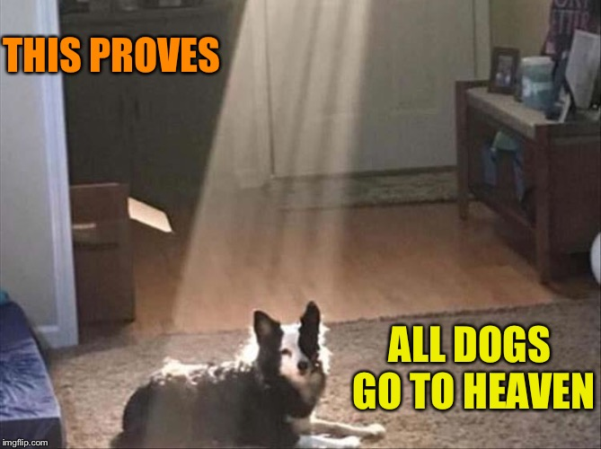 Good doggie! | THIS PROVES ALL DOGS GO TO HEAVEN | image tagged in dog week,dogs,memes,funny | made w/ Imgflip meme maker