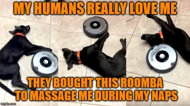 Who knew the Roomba was multi-purpose? (Dog week May 1-8, a Landon_the_memer and NikkoBellic event) | MY HUMANS REALLY LOVE ME THEY BOUGHT THIS ROOMBA TO MASSAGE ME DURING MY NAPS | image tagged in memes,roomba,dog week,dogs,massage | made w/ Imgflip meme maker