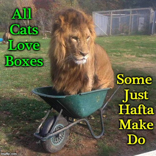 Obstacles While Gardening | All Cats Love Boxes Some Just Hafta Make Do | image tagged in vince vance,lions,gardening,lion in a wheelbarrow,cats,big cats | made w/ Imgflip meme maker