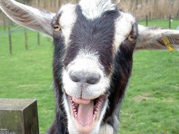 Goat be funny face smile | . | image tagged in goat be funny face smile | made w/ Imgflip meme maker