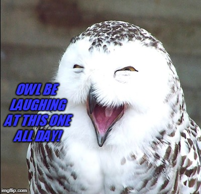 OWL BE LAUGHING AT THIS ONE ALL DAY! | made w/ Imgflip meme maker
