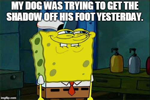 Dont You Squidward Meme | MY DOG WAS TRYING TO GET THE SHADOW OFF HIS FOOT YESTERDAY. | image tagged in memes,dont you squidward | made w/ Imgflip meme maker
