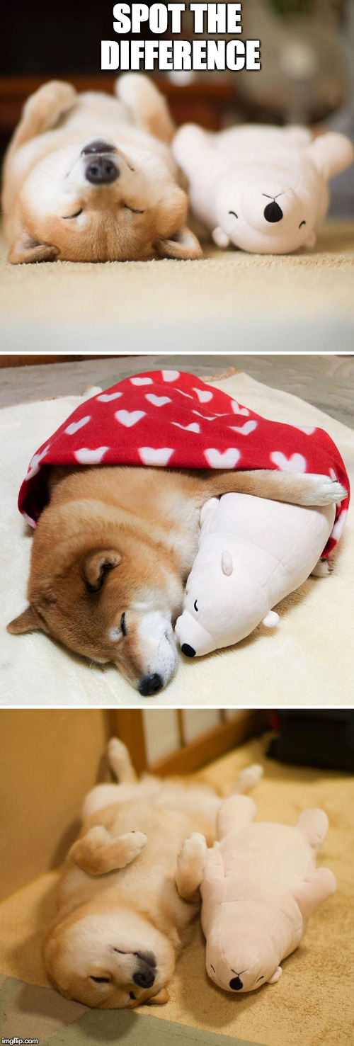 Shibe | SPOT THE DIFFERENCE | image tagged in shibe | made w/ Imgflip meme maker