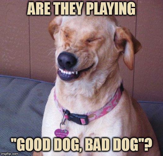 "ARE THEY PLAYING ""GOOD DOG, BAD DOG""? 