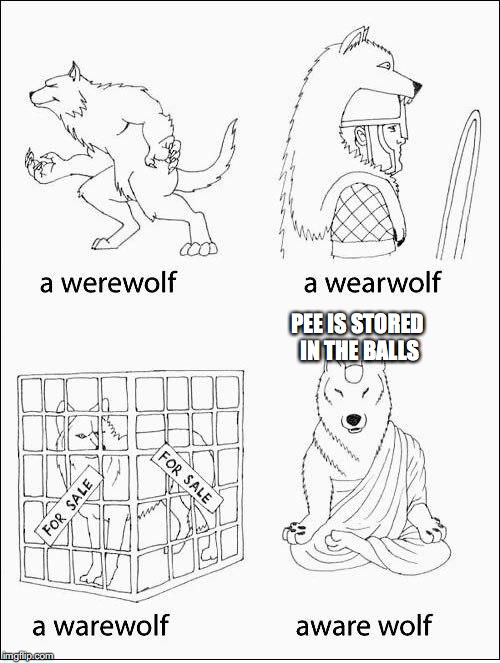 Aware Wolf | PEE IS STORED IN THE BALLS | image tagged in aware wolf,ebola,trash,garbage | made w/ Imgflip meme maker