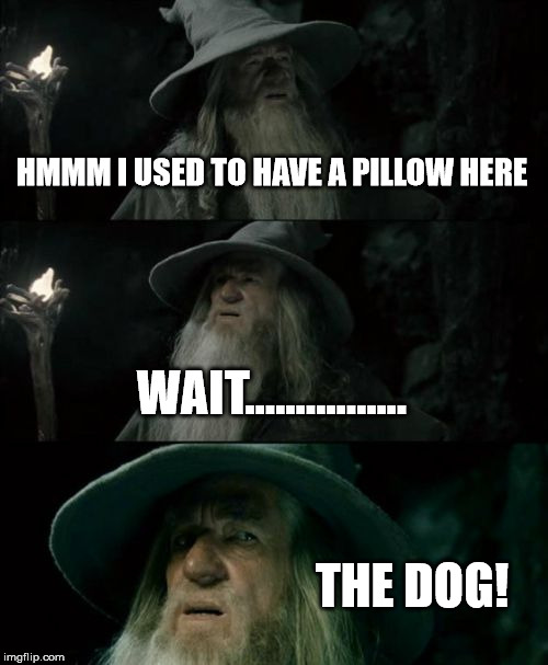 Confused Gandalf Meme | HMMM I USED TO HAVE A PILLOW HERE WAIT................ THE DOG! | image tagged in memes,confused gandalf | made w/ Imgflip meme maker