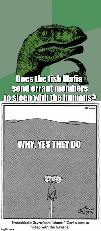 Does the fish Mafia send errant members to sleep with the humans? WHY, YES THEY DO | made w/ Imgflip meme maker