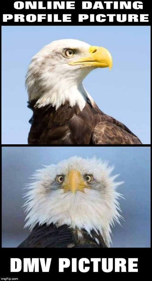 image tagged in bald eagle,facebook,instagram,dating,picture,profile picture | made w/ Imgflip meme maker