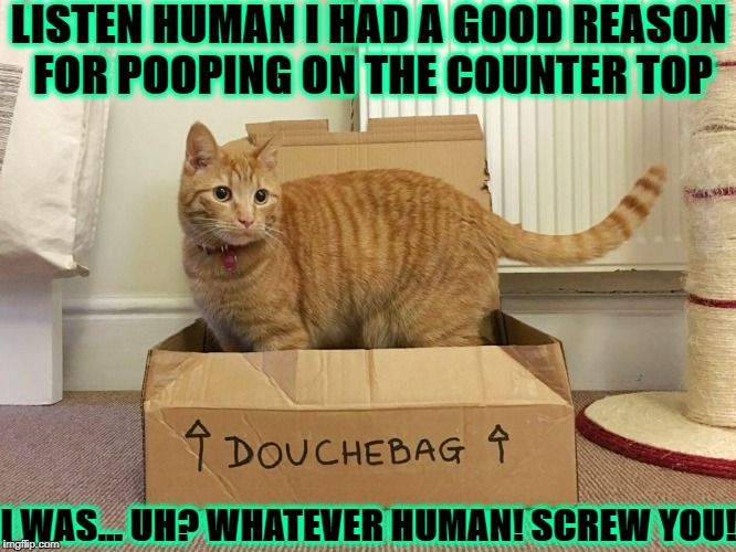 LISTEN HUMAN I HAD A GOOD REASON FOR POOPING ON THE COUNTER TOP I WAS... UH? WHATEVER HUMAN! SCREW YOU! | image tagged in fort douchebag | made w/ Imgflip meme maker