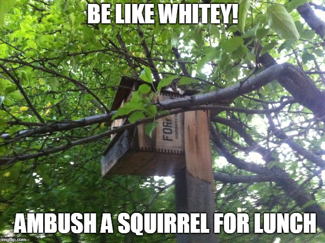 Cat Cam | BE LIKE WHITEY! AMBUSH A SQUIRREL FOR LUNCH | image tagged in cat | made w/ Imgflip meme maker