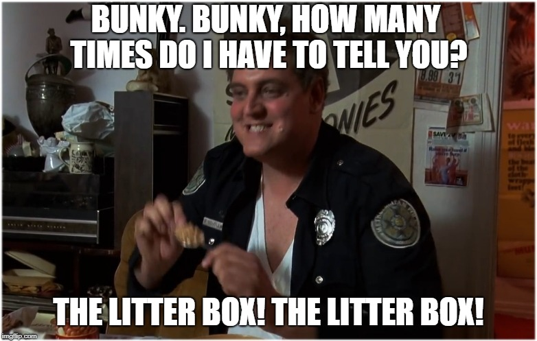Stop shitting in my cereal you nasty cat! | BUNKY. BUNKY, HOW MANY TIMES DO I HAVE TO TELL YOU? THE LITTER BOX! THE LITTER BOX! | image tagged in bunky liter box litter,cat breakfast,police academy,mahoneys partner,memes to meme | made w/ Imgflip meme maker