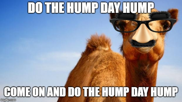 Camel | DO THE HUMP DAY HUMP COME ON AND DO THE HUMP DAY HUMP | image tagged in camel | made w/ Imgflip meme maker