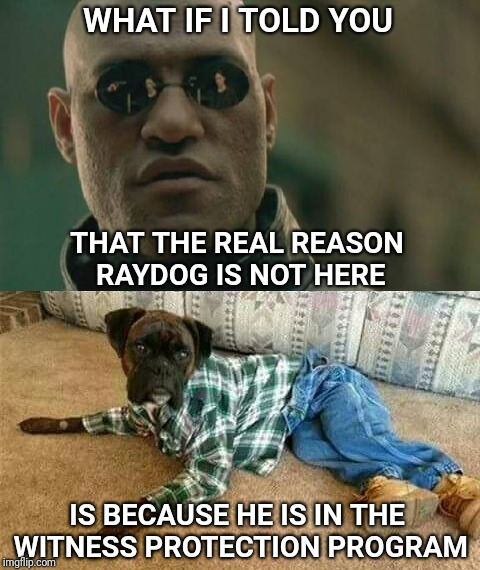 The big dog is in hiding | WHAT IF I TOLD YOU THAT THE REAL REASON RAYDOG IS NOT HERE IS BECAUSE HE IS IN THE WITNESS PROTECTION PROGRAM | image tagged in witnesses,protection,fbi,raydog,imgflip,top users | made w/ Imgflip meme maker