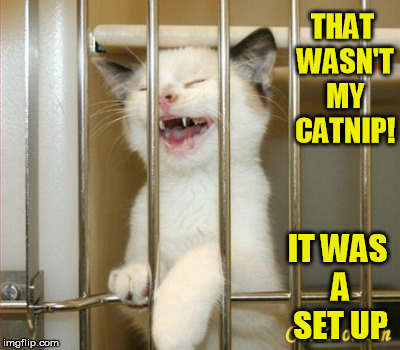 THAT WASN'T MY CATNIP! IT WAS A SET UP | made w/ Imgflip meme maker