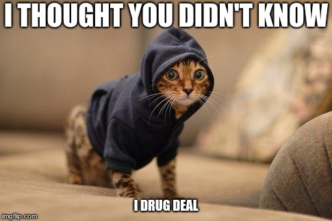Hoody Cat | I THOUGHT YOU DIDN'T KNOW I DRUG DEAL | image tagged in memes,hoody cat | made w/ Imgflip meme maker