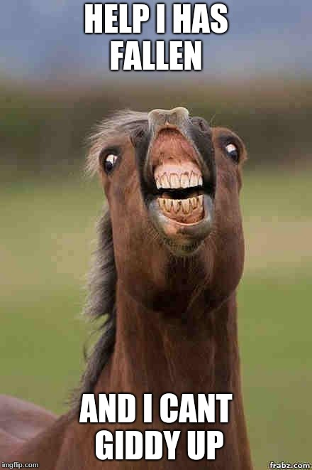 horse face | HELP I HAS FALLEN AND I CANT GIDDY UP | image tagged in horse face | made w/ Imgflip meme maker