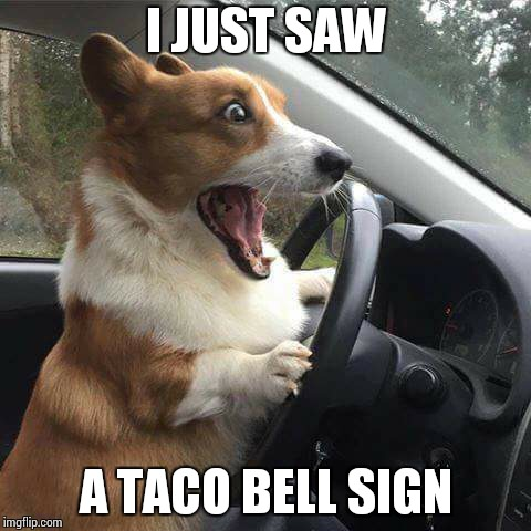 Rage Corgi |  I JUST SAW; A TACO BELL SIGN | image tagged in rage corgi | made w/ Imgflip meme maker