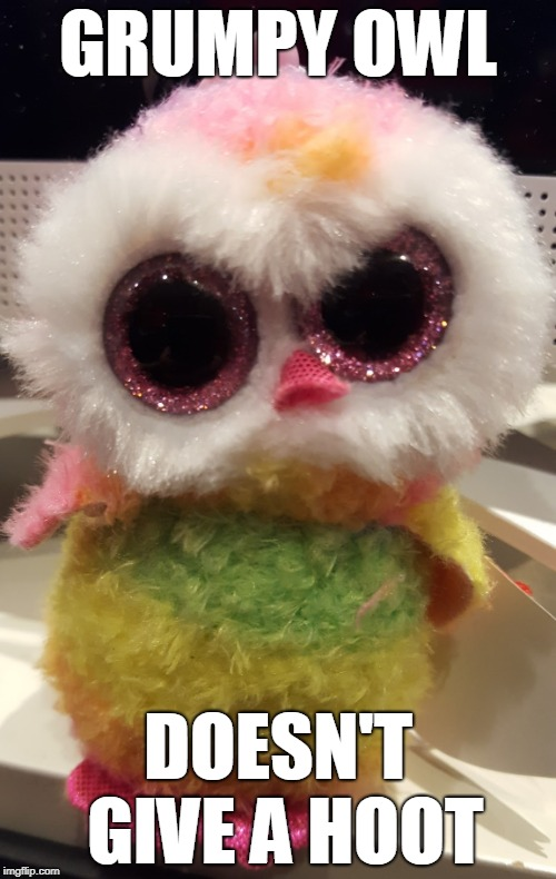 GRUMPY OWL DOESN'T GIVE A HOOT | image tagged in grumpy owl | made w/ Imgflip meme maker