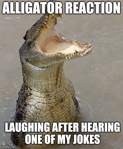Alligators love Laughter  | ALLIGATOR REACTION LAUGHING AFTER HEARING ONE OF MY JOKES | image tagged in funny memes | made w/ Imgflip meme maker
