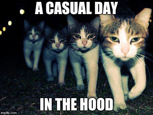 Wrong Neighboorhood Cats | A CASUAL DAY IN THE HOOD | image tagged in memes,wrong neighboorhood cats | made w/ Imgflip meme maker