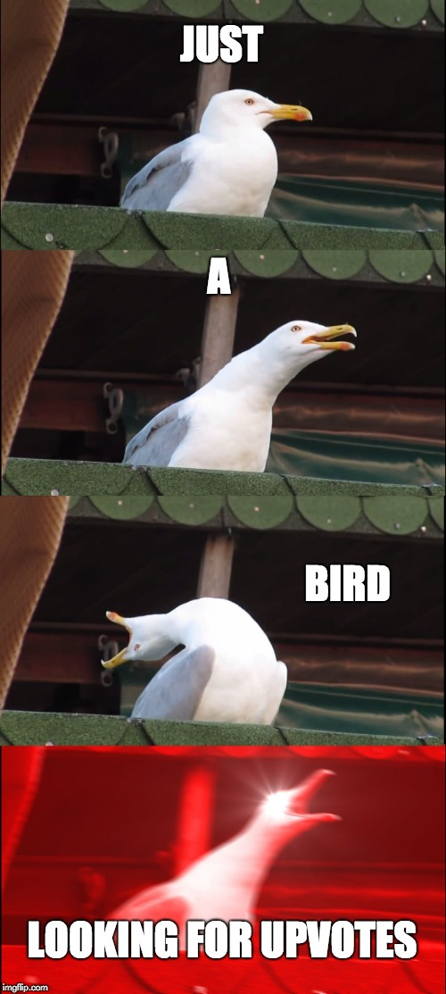 Please? | JUST A BIRD LOOKING FOR UPVOTES | image tagged in memes,inhaling seagull | made w/ Imgflip meme maker