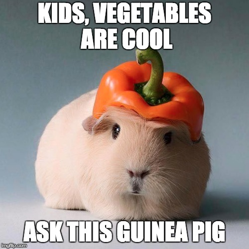 KIDS, VEGETABLES ARE COOL ASK THIS GUINEA PIG | image tagged in guinea pig with vegetable | made w/ Imgflip meme maker